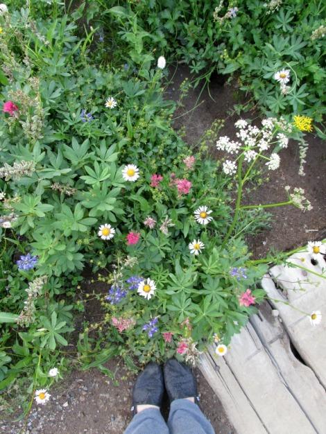Enjoying the Wildflowers at Mt. Rainier National Park.  August, 2013.