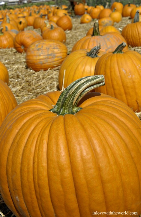 Pumpkins | inlovewiththeworld.com