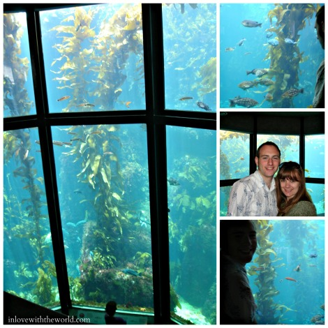 The Monterey Bay Aquarium Kelp Forest | inlovewiththeworld.com